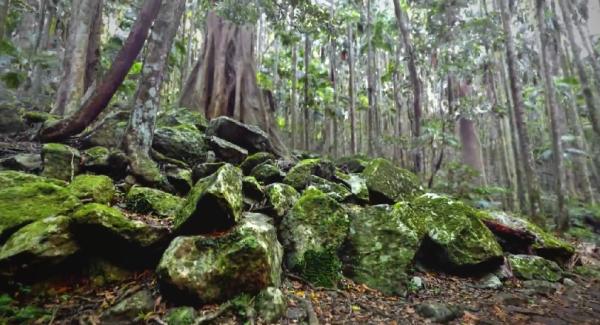 euclidean_solidscan_forest