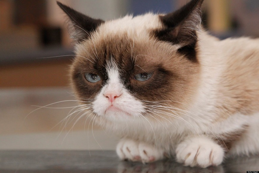 Disappointed cat, is disappointed.
