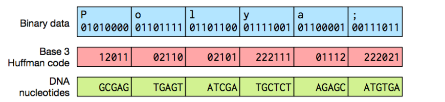 DNA huffman code compression