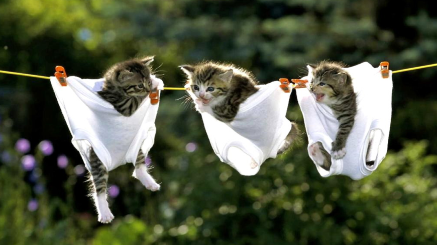 kittens in pants