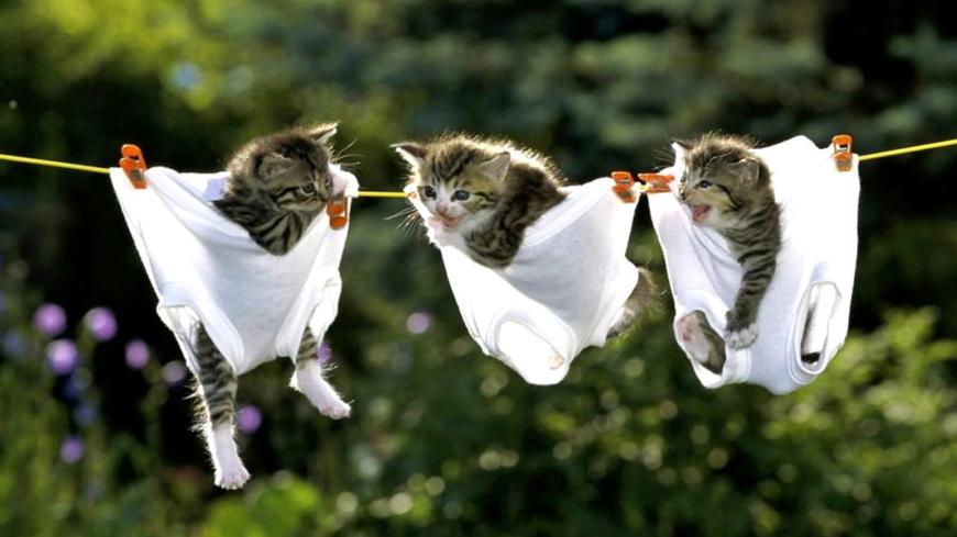 kittens in pants