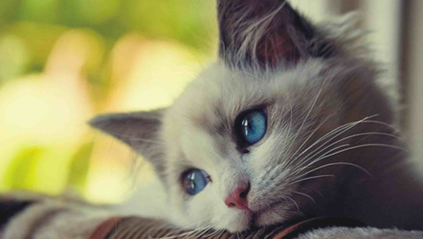 you make kitty sad
