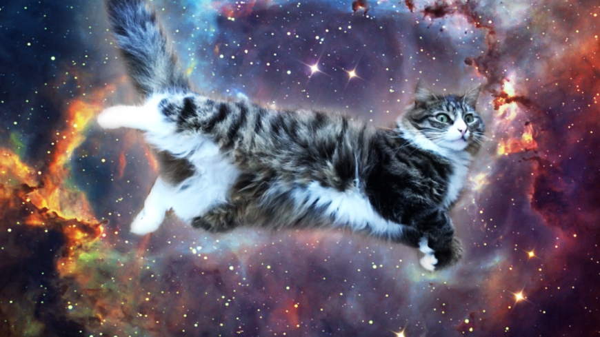 galaxy-cat