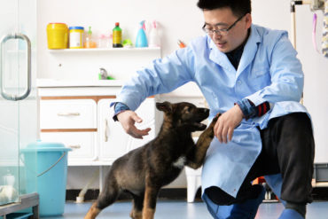 Chinese police dog clone, Kunxun, is the first in an experimental police dog cloning project