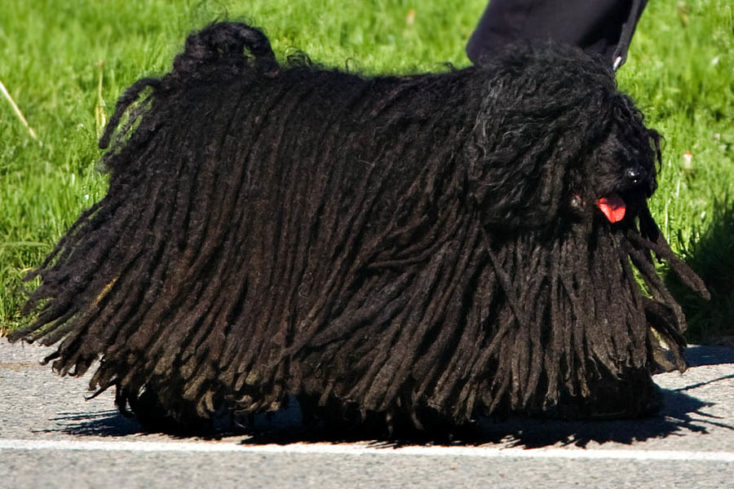 Cathartic object robot looks like a Puli dog you can stab.