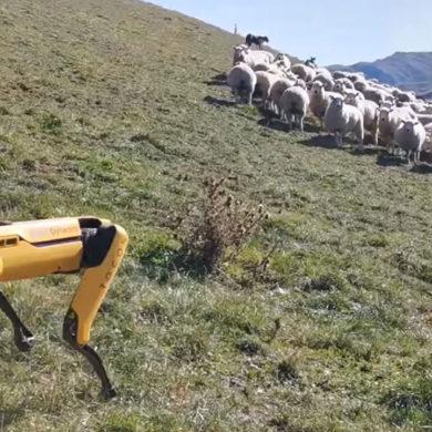 Boston Dynamics Sheep Spot